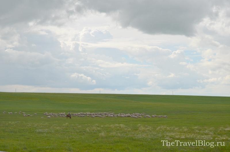 Пастух и стадо овец
