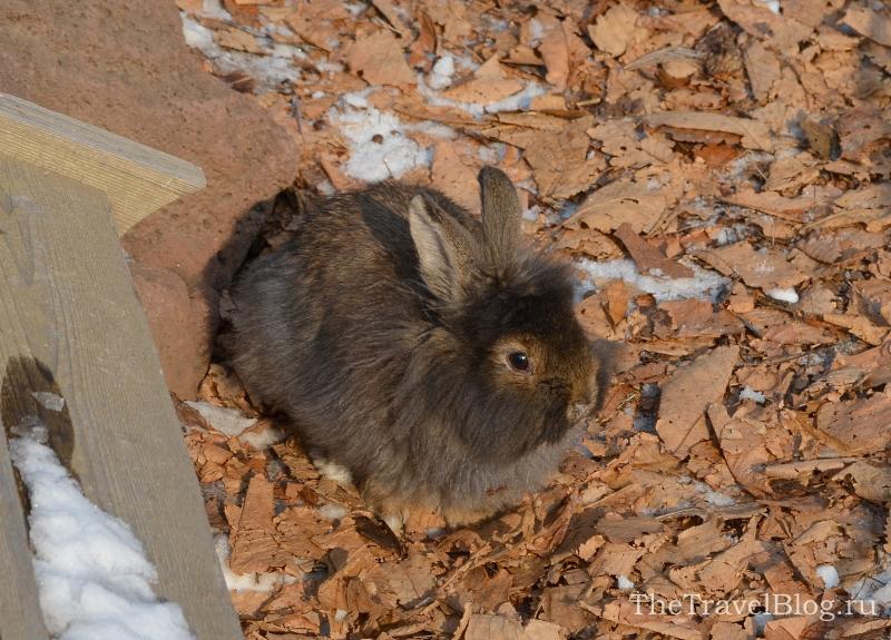 Кролики - любимая забава малышей