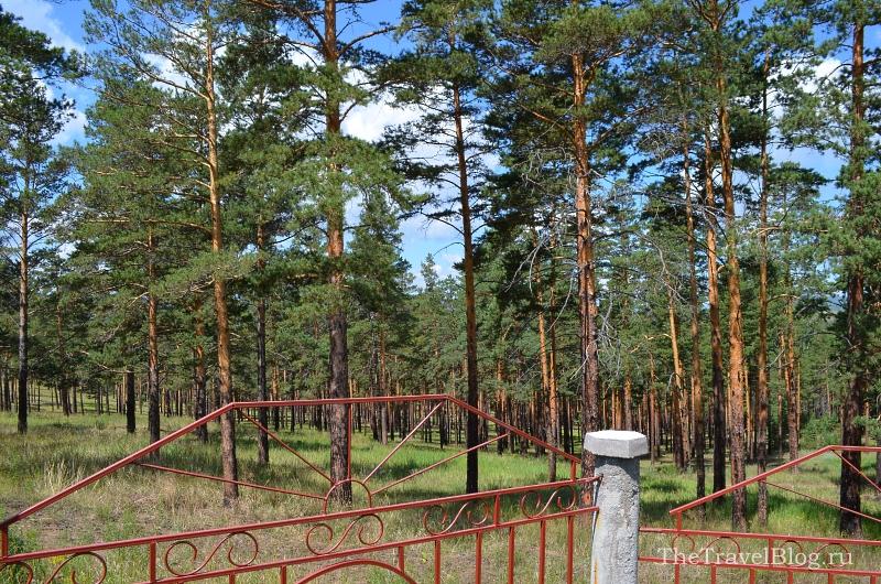 дорога долгой жизни пролегает рядом с хвойным лесом