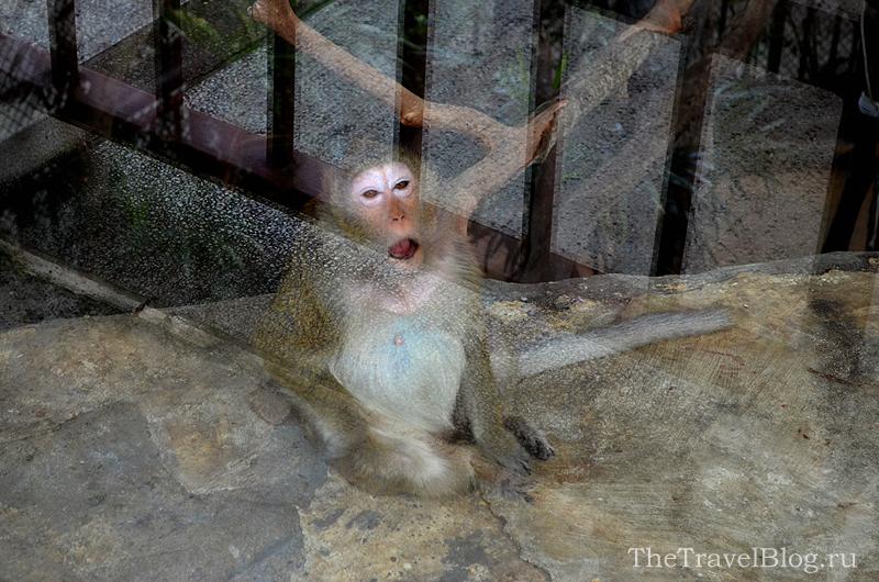 смешная обезьянка
