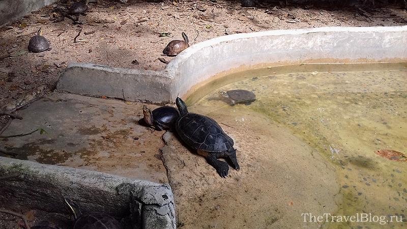 черепахи в воде