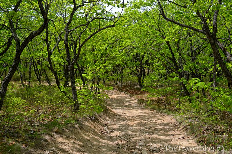 дорога и деревья