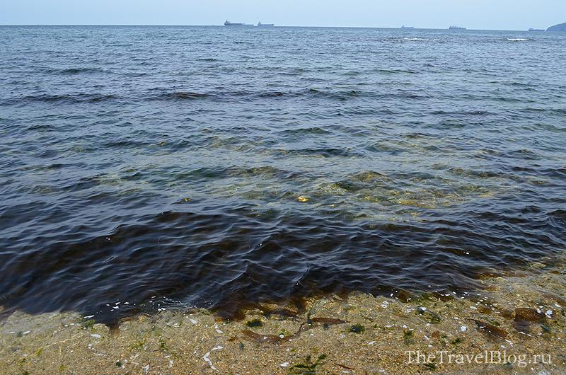 водоросли и море