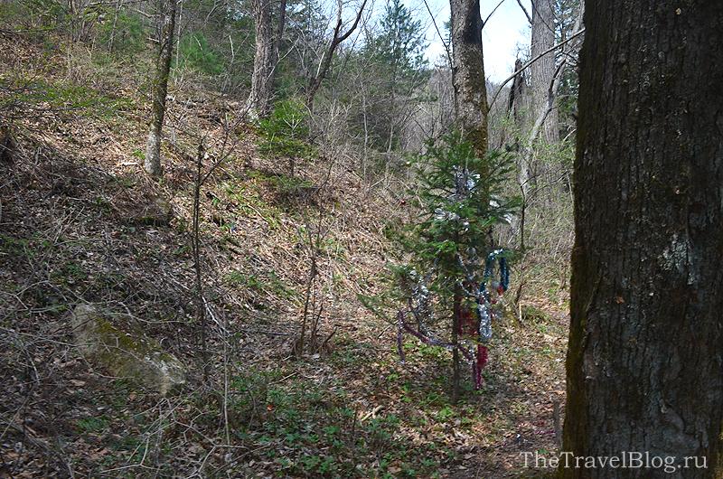 наряженая елка в лесу