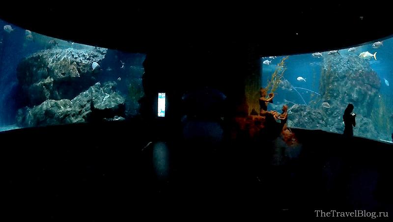 2 больших аквариума