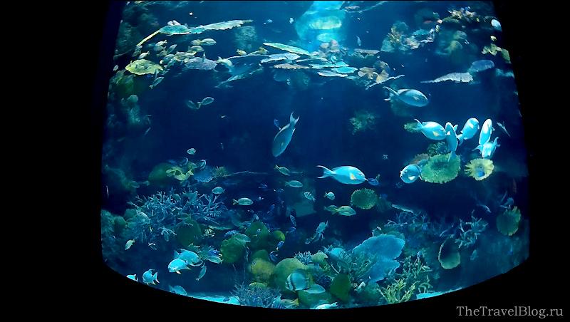 аквариум и много рыб