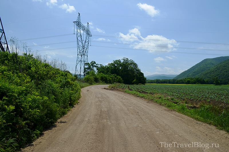 поле картофеля и дорога