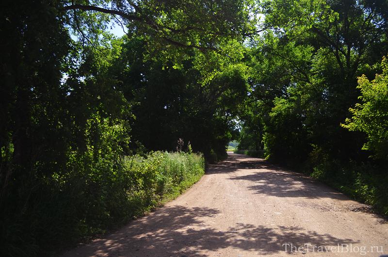 дорога в тени деревьев