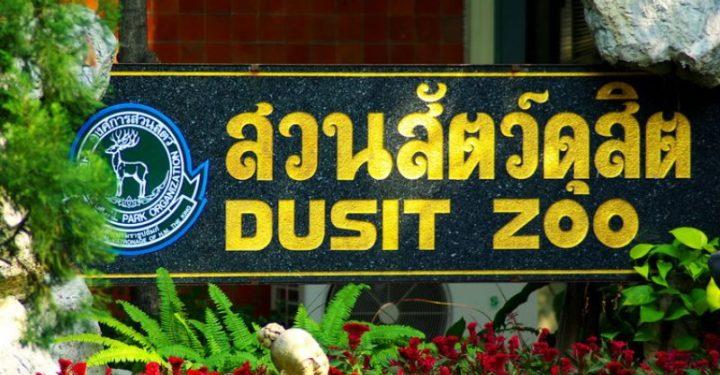 визитка зоопарка Дусит в Бангкоке