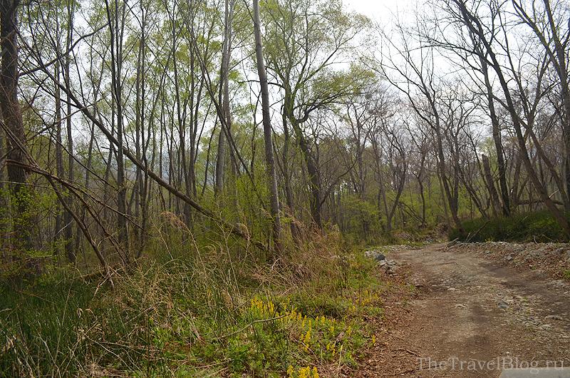 деревья и лесная дорога