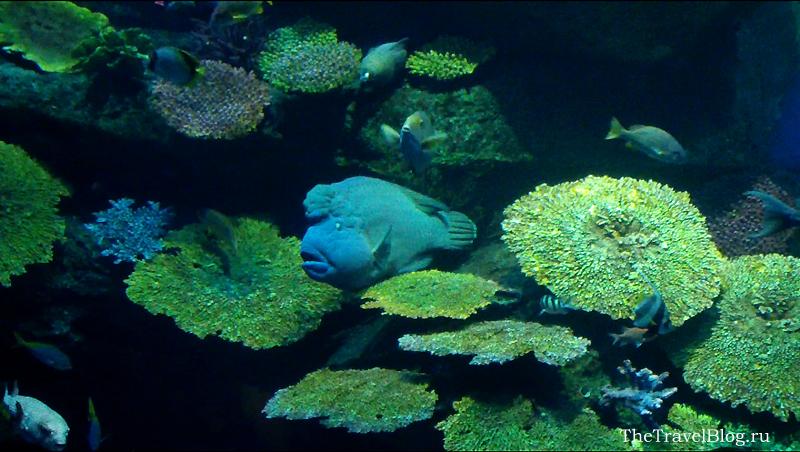 задумчивая рыбка