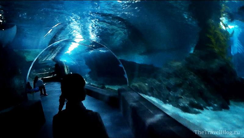 водный коридор в океанариуме