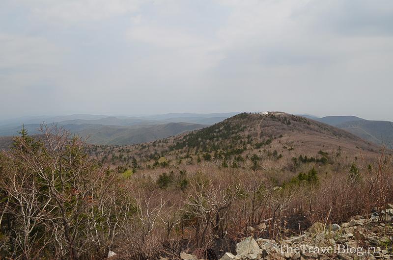 скалы и сосны