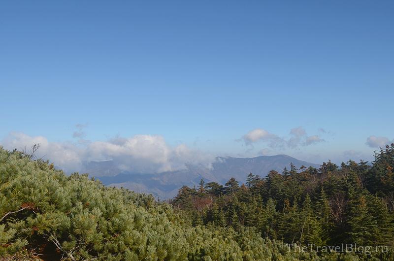 лес и облако